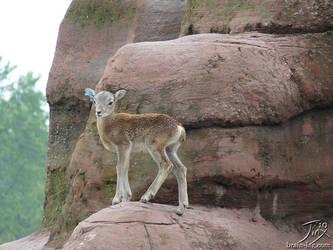 Mouflon calf by CitizenOfZozo