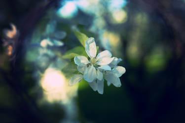 Apple flower wants a hug