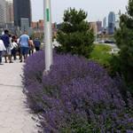 Lavender Flowers  by PrettyShadowj28