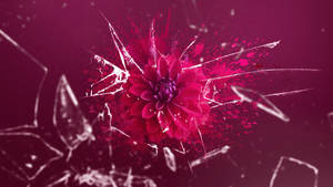 Shattering bloom