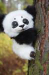 Little Panda!