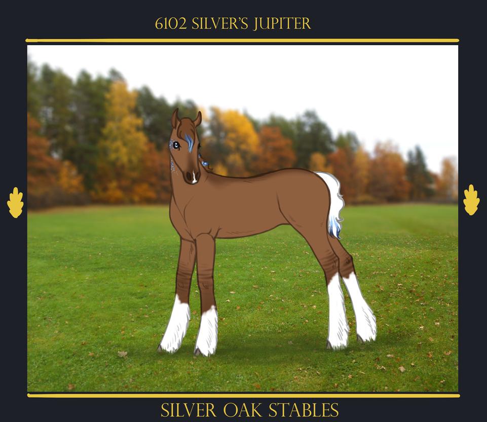 6102 Silver's Jupiter by SilverOakStables