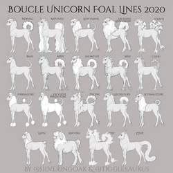 Boucle Unicorn Foal Lines 2020