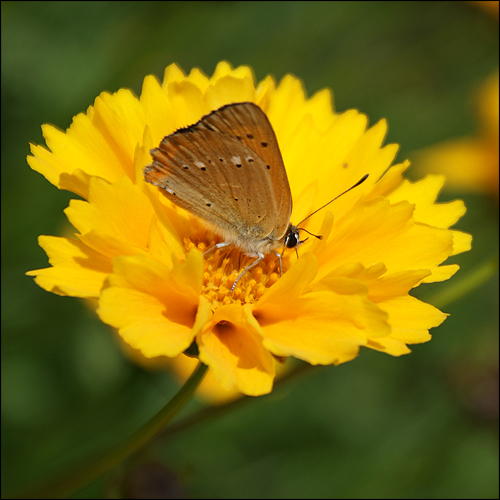 Motylek I by kikoshima