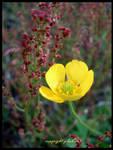 little flower by Zlata-Petal