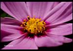 flower 5 by Zlata-Petal