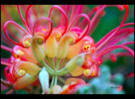 flower 48 by Zlata-Petal