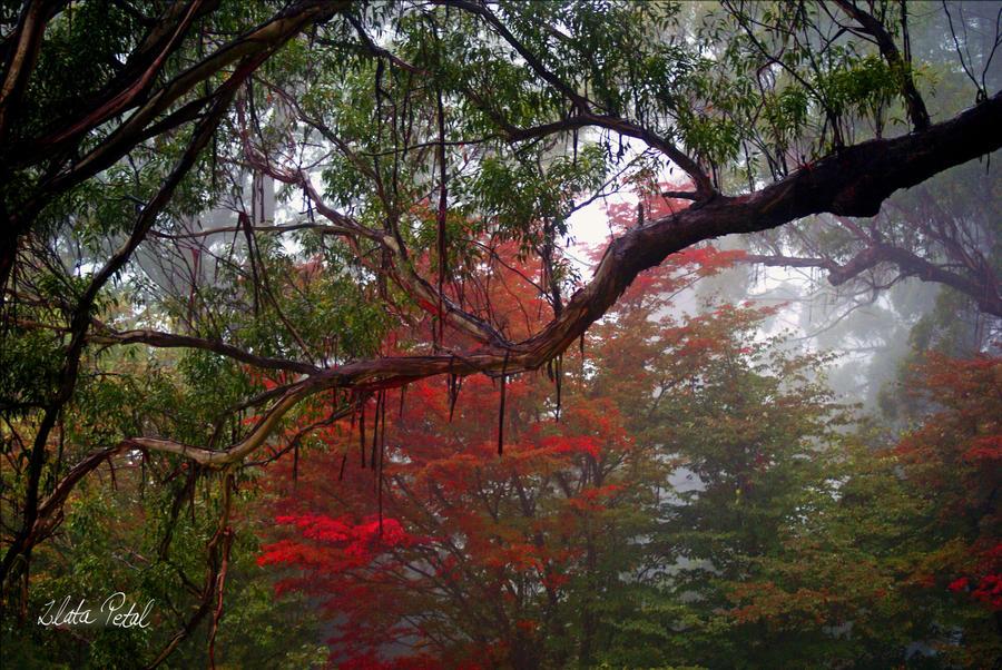 Botanical Garden by Zlata-Petal