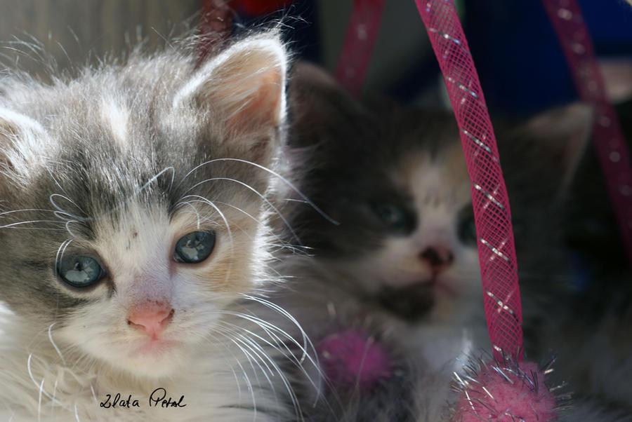 my little ones by Zlata-Petal