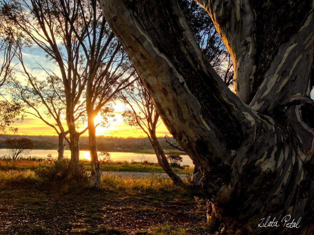 morning sunrise by Zlata-Petal