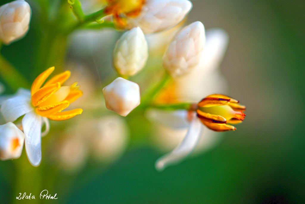 tiny flower by Zlata-Petal