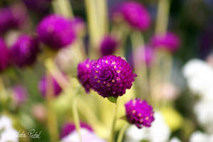 The Passion in Flower by Zlata-Petal
