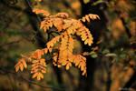 Small orange leaves branch by Zlata-Petal