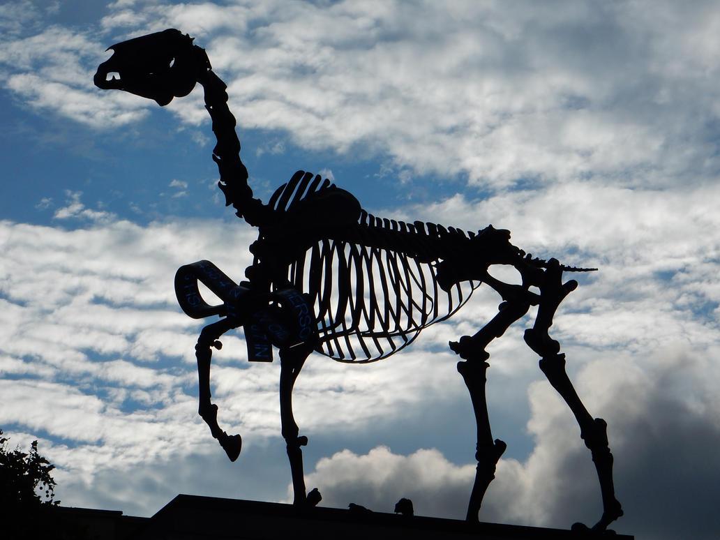 Gift Horse by rlkitterman