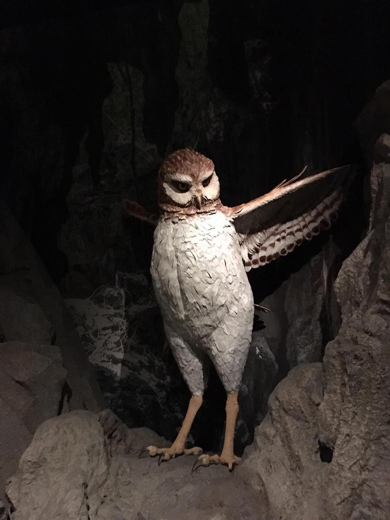 Museum Of Natural History Cuban Exhibit