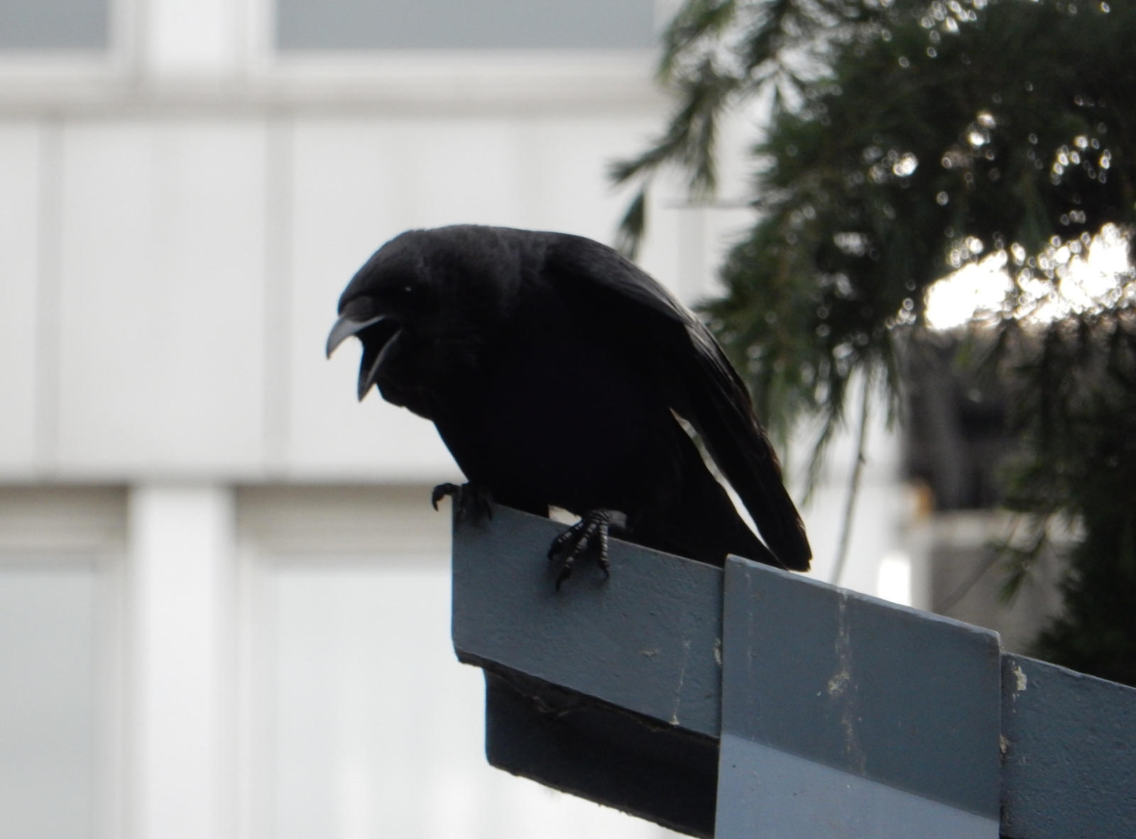 Crow On Southend Warrior Square By Rlkitterman On Deviantart