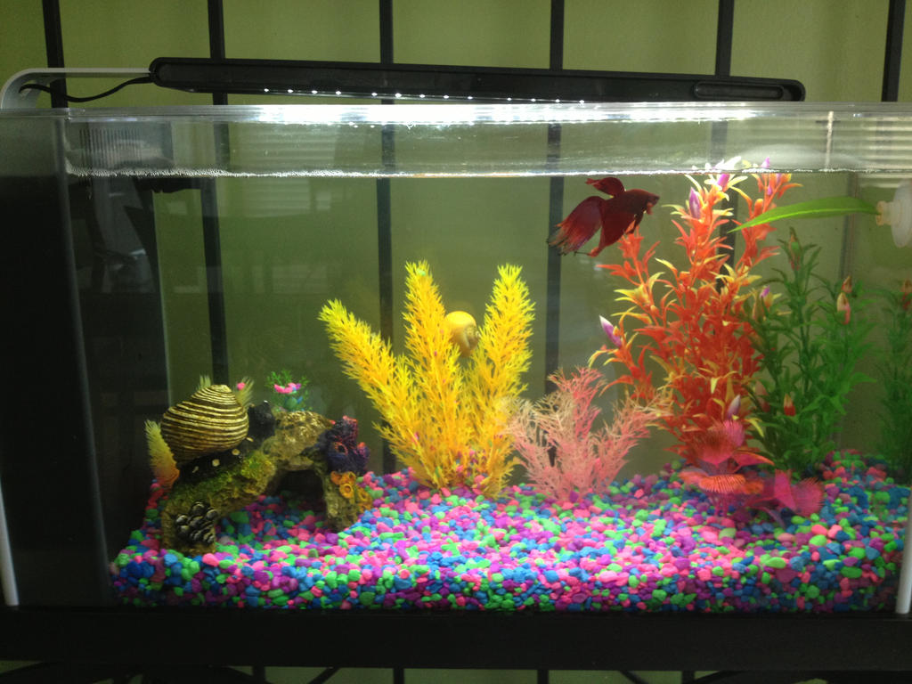 Betta fishtank by tiffanydulamal on deviantart for Betta fish tank size