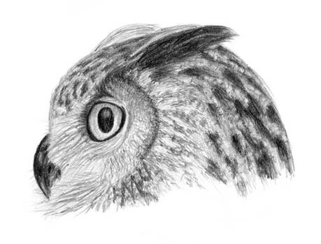 Owl sketch - finished