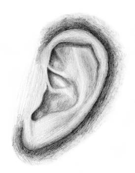 Ear - Drawing day 2011