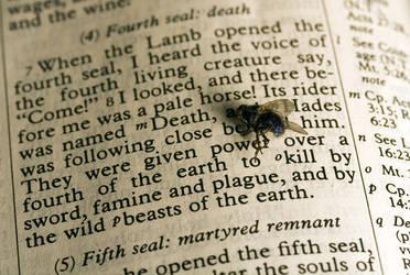 Bibly Fly