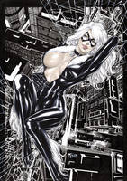 Black cat by Fredbenes