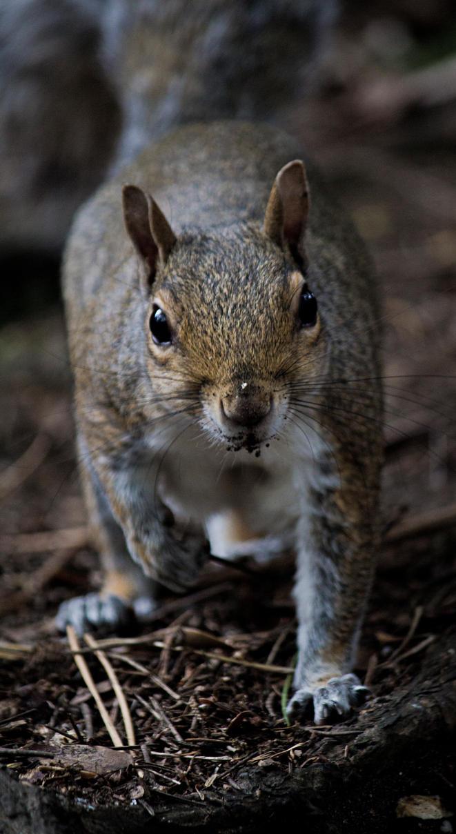 Squirrel by paulfeb282
