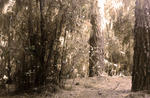 Scorpion Dead Forest Cinemagraph by Barbie-H