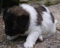 Puppy by Threebeyond