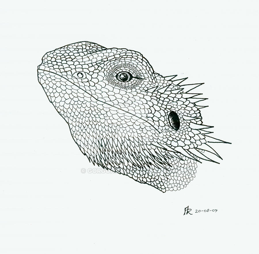 Bearded Dragon By Gorgone On Deviantart