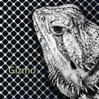 My Beloved Bearded Dragon, Gizmo