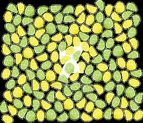 Summertime Citrus Theme Design