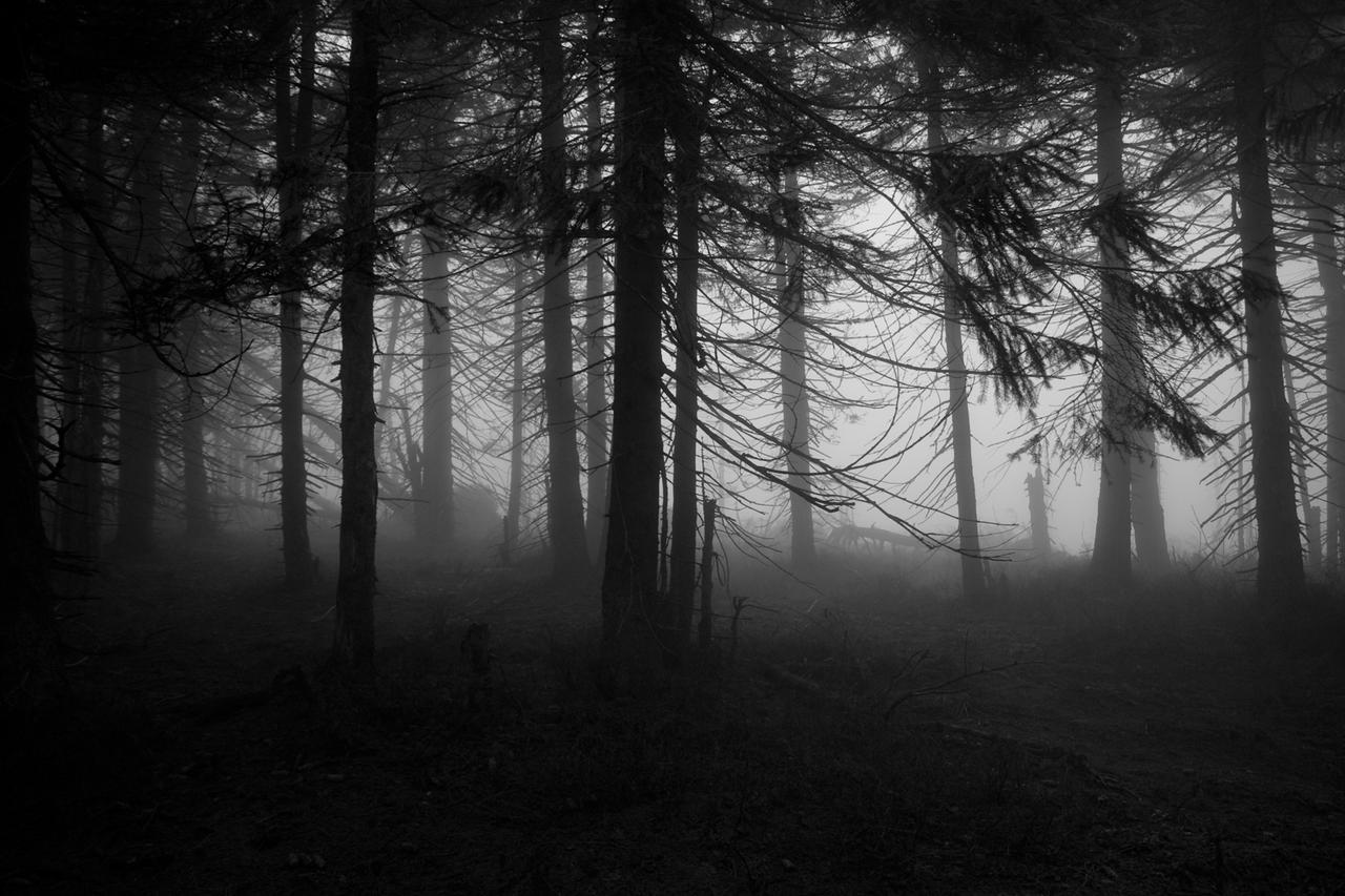 Spooky forest 1 by Miwicz