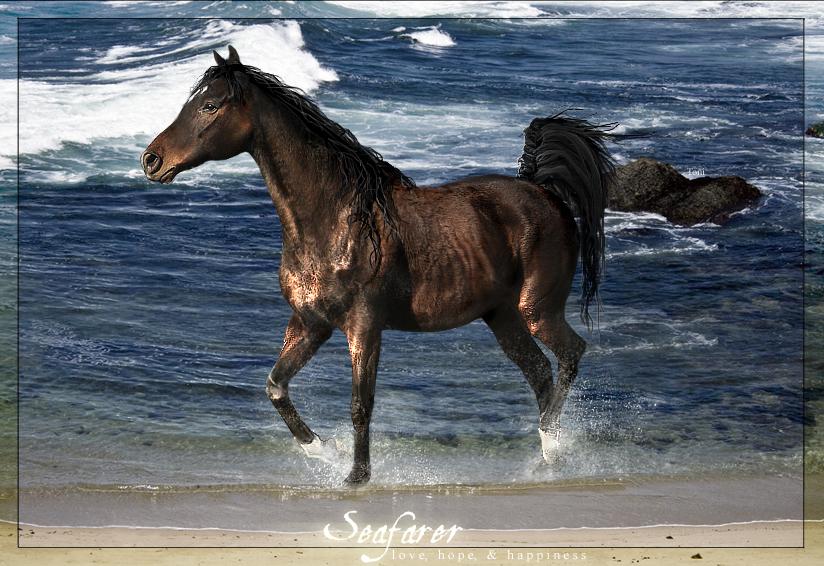 ^ Twilightstars ^ horses Seafarer___The_Horse_by_VagabondQAD
