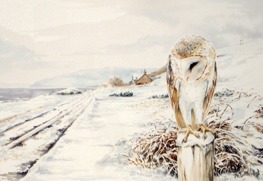 Barn Owl - Machrie, Arran by Atriedes