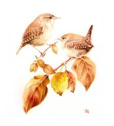 Wrens by Atriedes