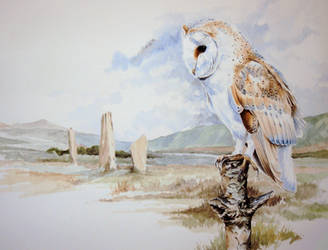 Barn Owl - The Stones, Arran by Atriedes