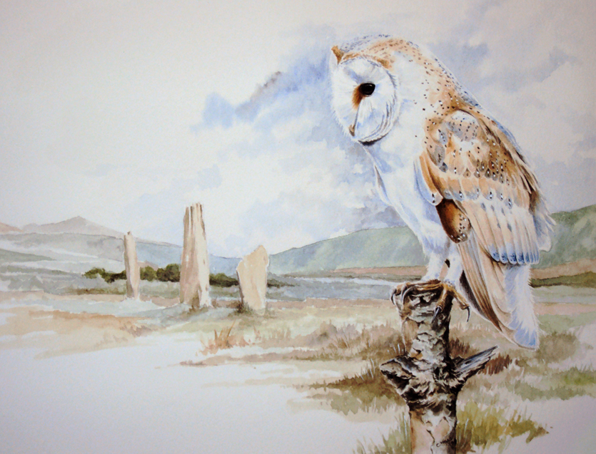 Barn Owl - The Stones, Arran by Atriedes