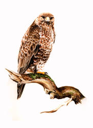 Another Buzzard by Atriedes