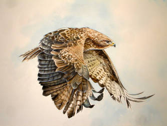 Buzzard in Flight by Atriedes