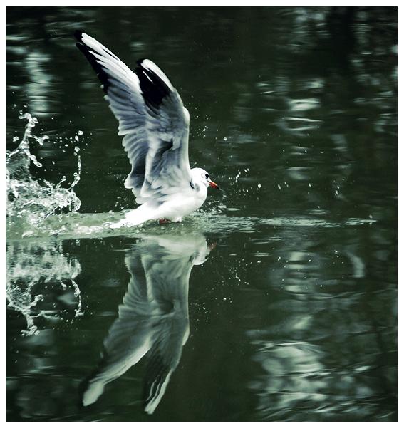 Le fil blanc L__Oiseau_by_Imagimax