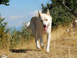 Walking dog by Imagimax