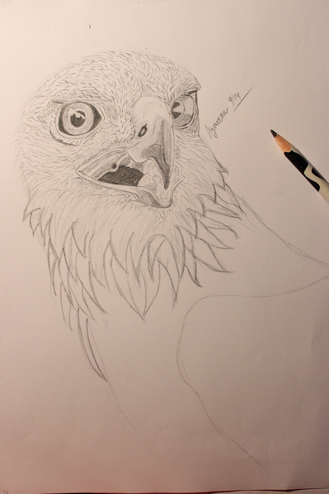 Golden Eagle by Aynarra
