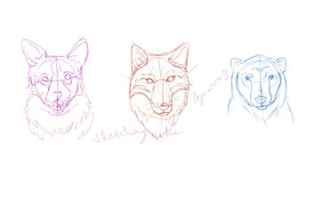 3 heads sketches by Aynarra
