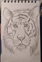 Tiger - quick sketch