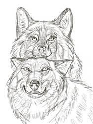Digital wolves sketch