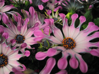 flowers by spm62