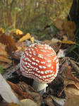 Fly agaric by spm62