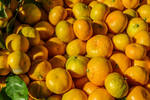 bright fruits tangerines by spm62