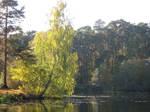 golden autumn on the lake