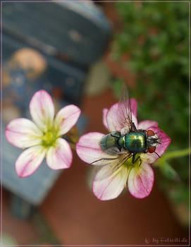 a fly flies...
